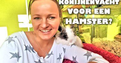 konijnenvacht van een konijn voor hamsters