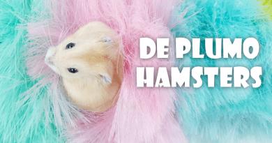 plumo hamsters