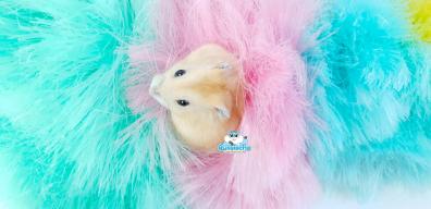 plumo-hamster-2
