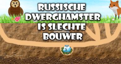 Russische Dwerghamsters zijn slechte bouwers