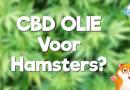 CBD Olie voor hamsters