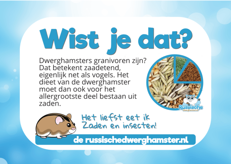 hamster voeding wist je dat