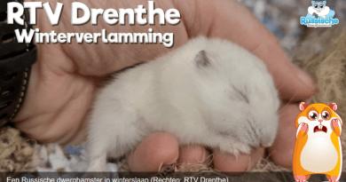 RTV Drenthe winterverlamming