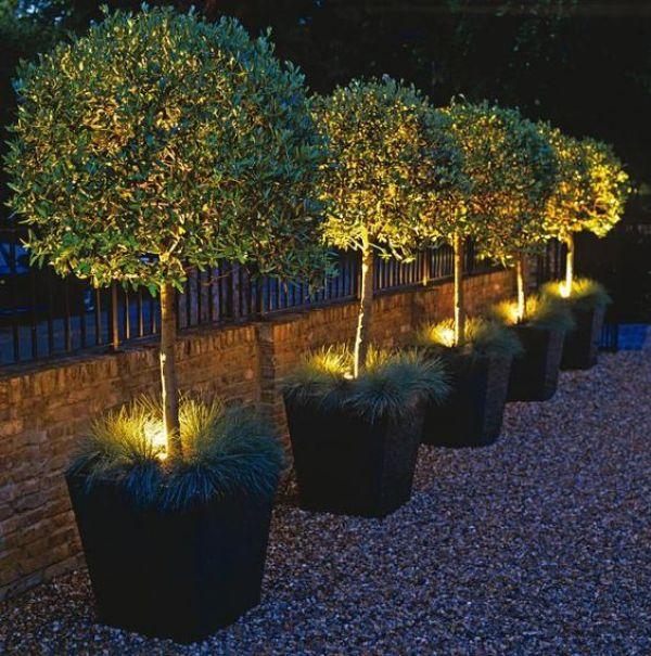 Iluminación PLANTAS