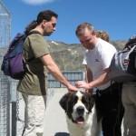 Saint Bernard dogs to the hill
