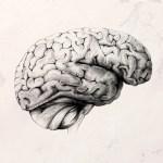 Un cerveau et des notes de musique