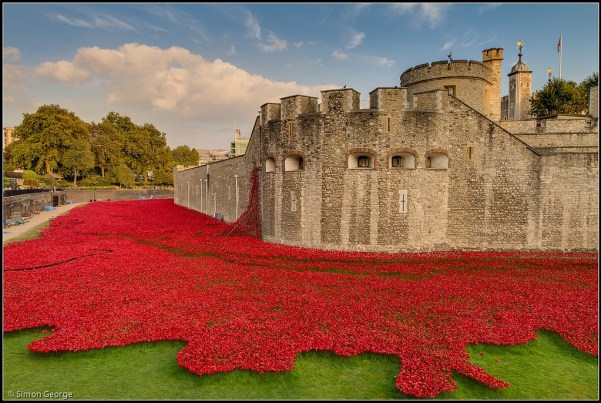 tower-of-london-blood-poppies