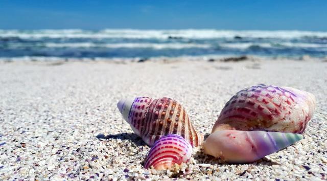 Coquillages roses sur la plage et vagues dans le fond