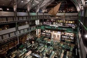 Oxford Pitt Rivers museo en Oxford