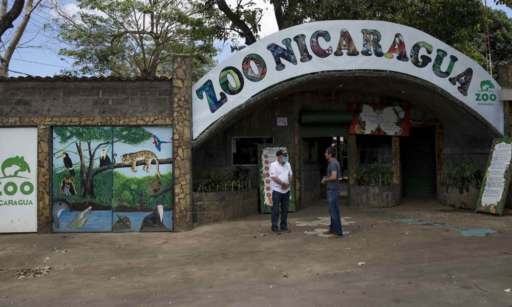 Un millar de animales del Zoológico Nacional de Nicaragua corren el riesgo de quedarse sin alimentos, debido a la falta de visitantes causada por la pandemia de covid-19. EFE/Jorge Torres | Niú