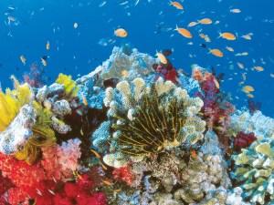 Corales marinos contra el SIDA