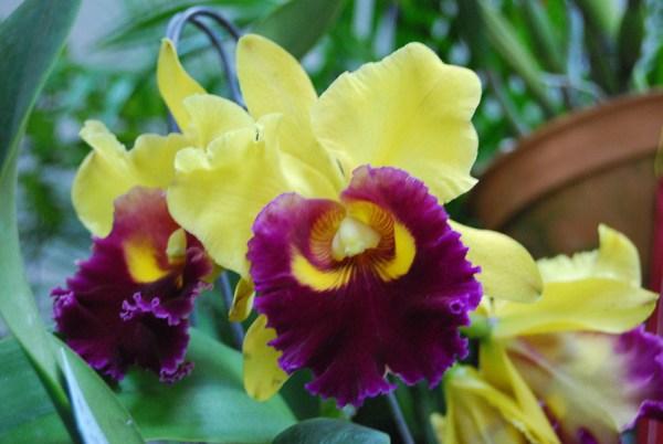 orquidea (1)