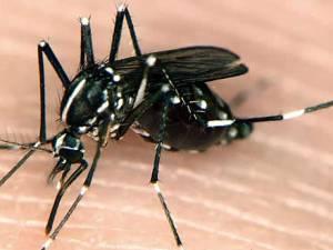 casos de chikungunya