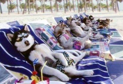 perros-vacaciones (1)