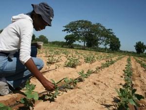 Importación de semillas al país