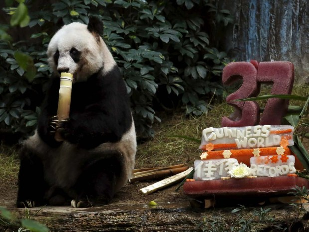 Giant panda Jia Jia eats beside a birthday cake made from ice and vegetables prepared by Ocean Park staff on her 37-year-old birthday at the Hong Kong Ocean Park