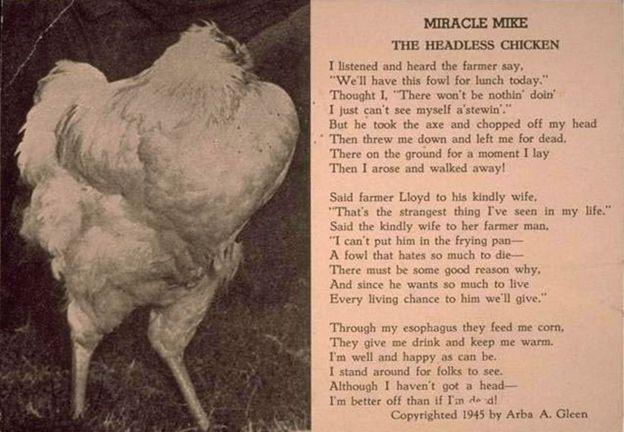 Pollo sin cabeza 3