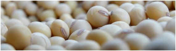 grano modificado 1