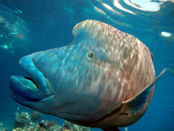 animales-marinos3