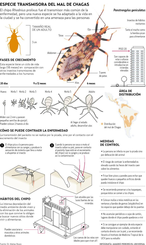 infografia mal de chagas