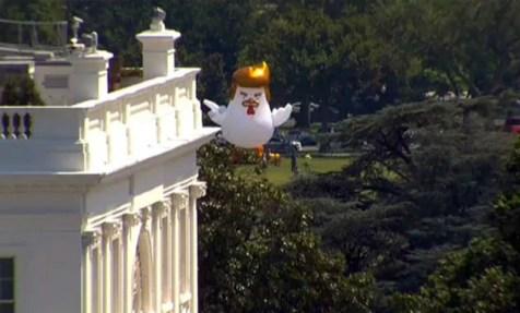 Trump-Pollo-casa blanca