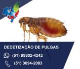 dedetização de pulgas