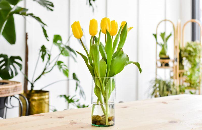 Met deze tips geniet je lang van je tulpen.