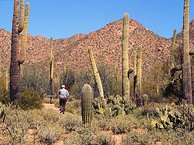 Desert Guide Plant Arizona
