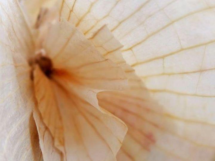 Pluche d'ail rose