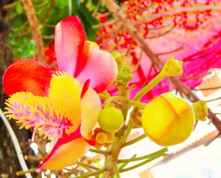 Fleur tropicale dans l'enceinte d'un temple, Chiang Mai - Thailande