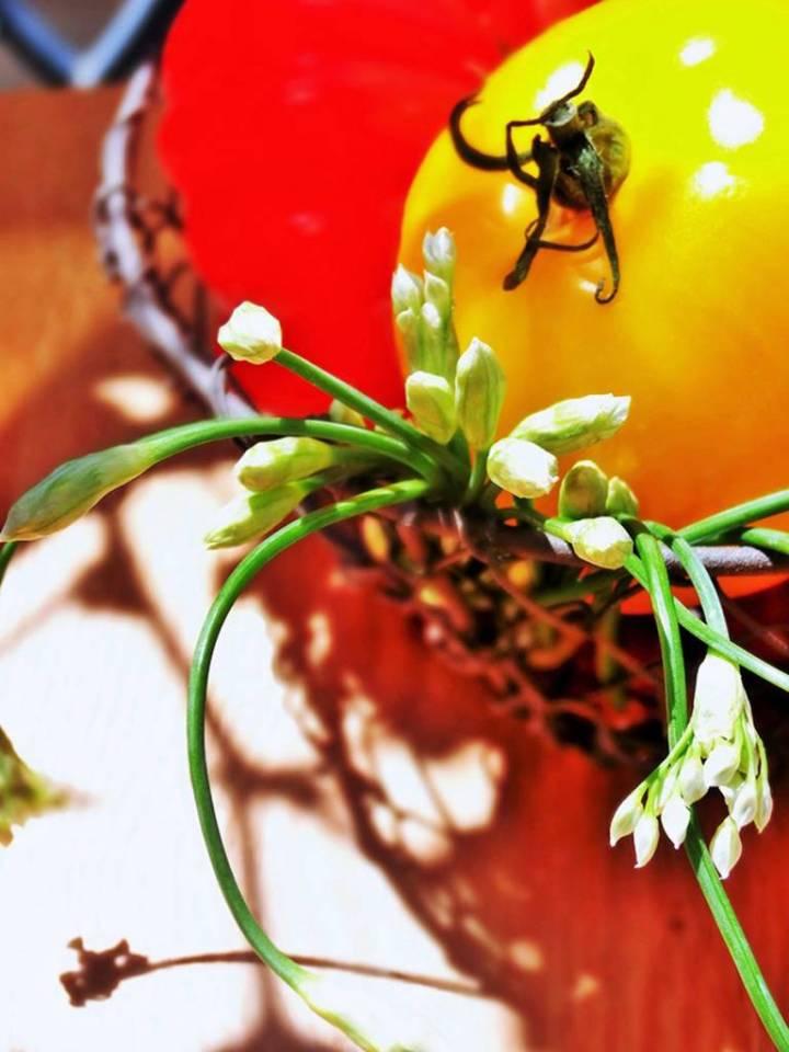 Fruits du soleil