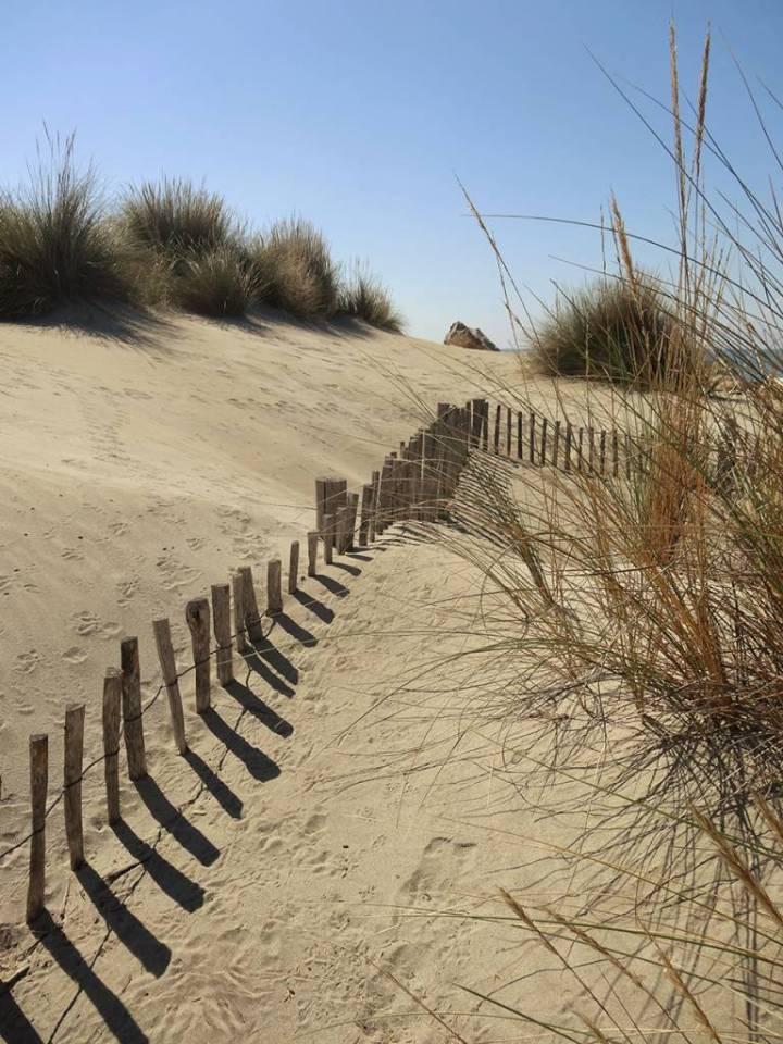 Dunes Camarguaises
