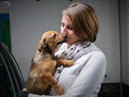Adinutza - chiens adoptés en 2015