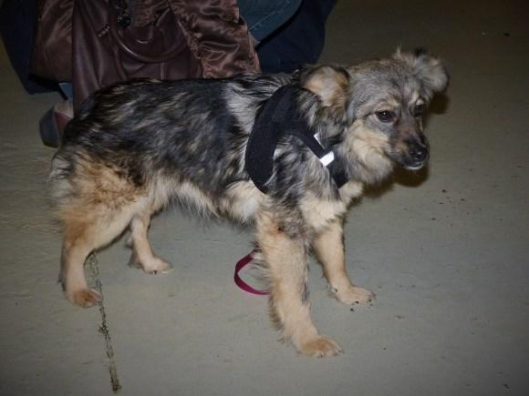 Alexia - chiens adoptés en 2016