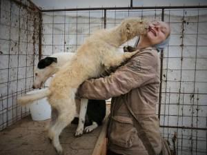 Asia - chiens adoptés en 2014