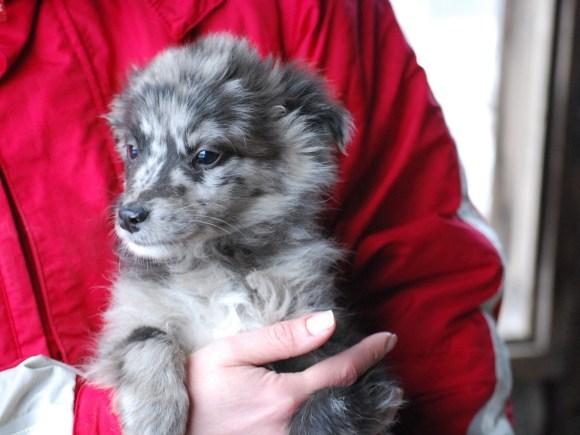Bandit - chiens adoptés en 2015
