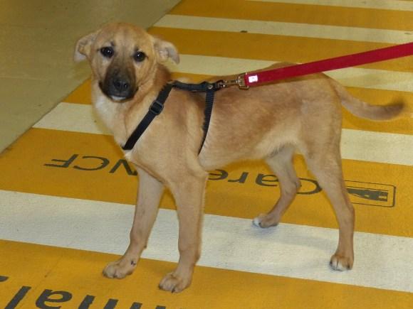 Biscotte - chiens adoptés en 2015