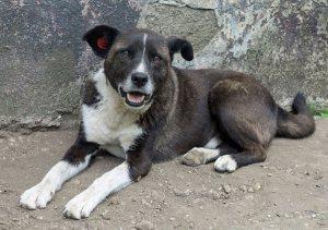 Booba - chiens adoptés en 2013