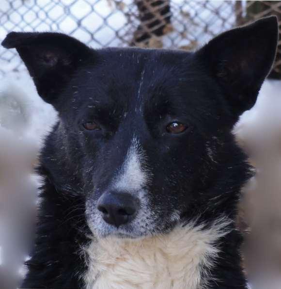 Cachou - chiens adoptés en 2013