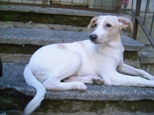 Chico - chiens adoptés en 2013