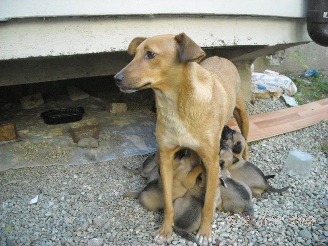 chiens communautaires