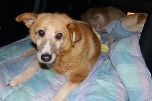 Fetitza - chiens adoptés en 2013