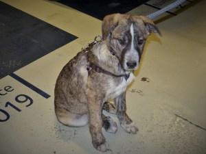 Hooch - chiens adoptés en 2016