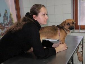 Izzy - chiens adoptés en 2014