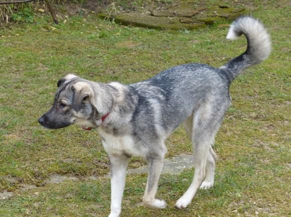 chiens adoptés en 2015 - Jules