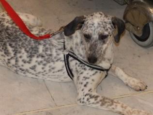 Lucia - chiens adoptés en 2014