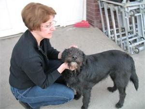 Netty - chiens adoptés en 2013