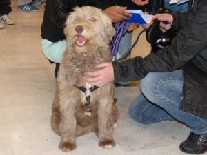 Darya - chiens adoptés en 2014