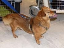 Franky - chiens adoptés en 2014