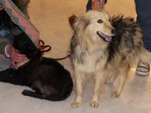 Gizelle - chiens adoptés en 2014